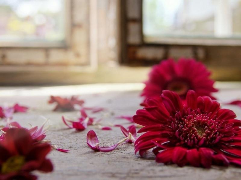 Картинки на рабочий стол красивые большие цветы